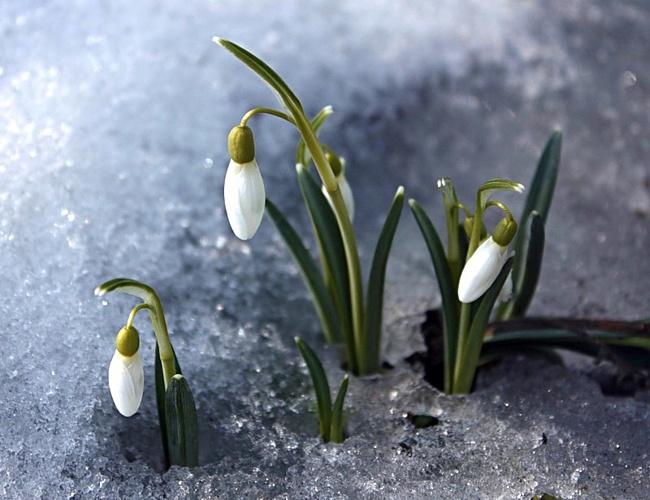 Открытки поздравления с первым днем весны